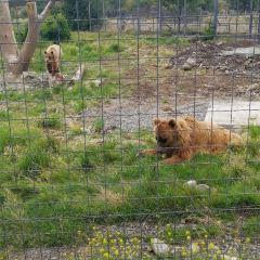 Kamloops Wildlife Park User Photo