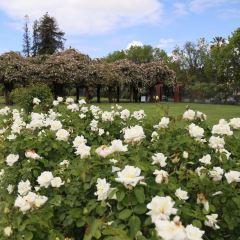 Municipal Rose Garden User Photo