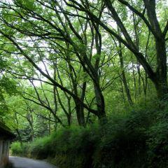 龍淵森林公園用戶圖片