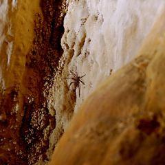 Capricorn Caves User Photo