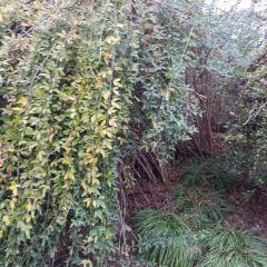 布里斯本森林公園用戶圖片