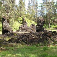 州立熔岩樹公園用戶圖片
