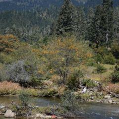色季拉國家森林公園用戶圖片