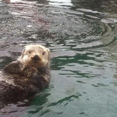 西雅圖水族館用戶圖片