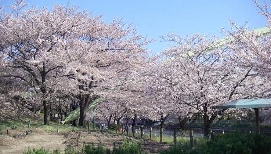 Arakogawa Park