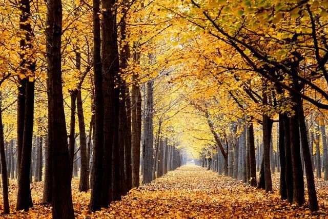 The Feelings of Autumn in November: Who Said that There is No Autumn in the South? The Autumn Scenery of These Small Southern Cities will Take Your Breath Away!