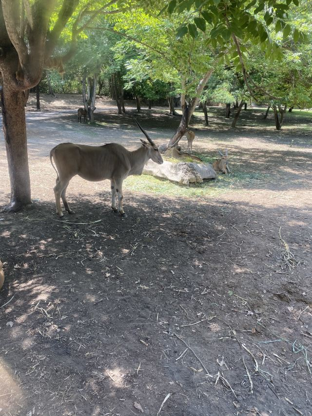巴厘野生動物園