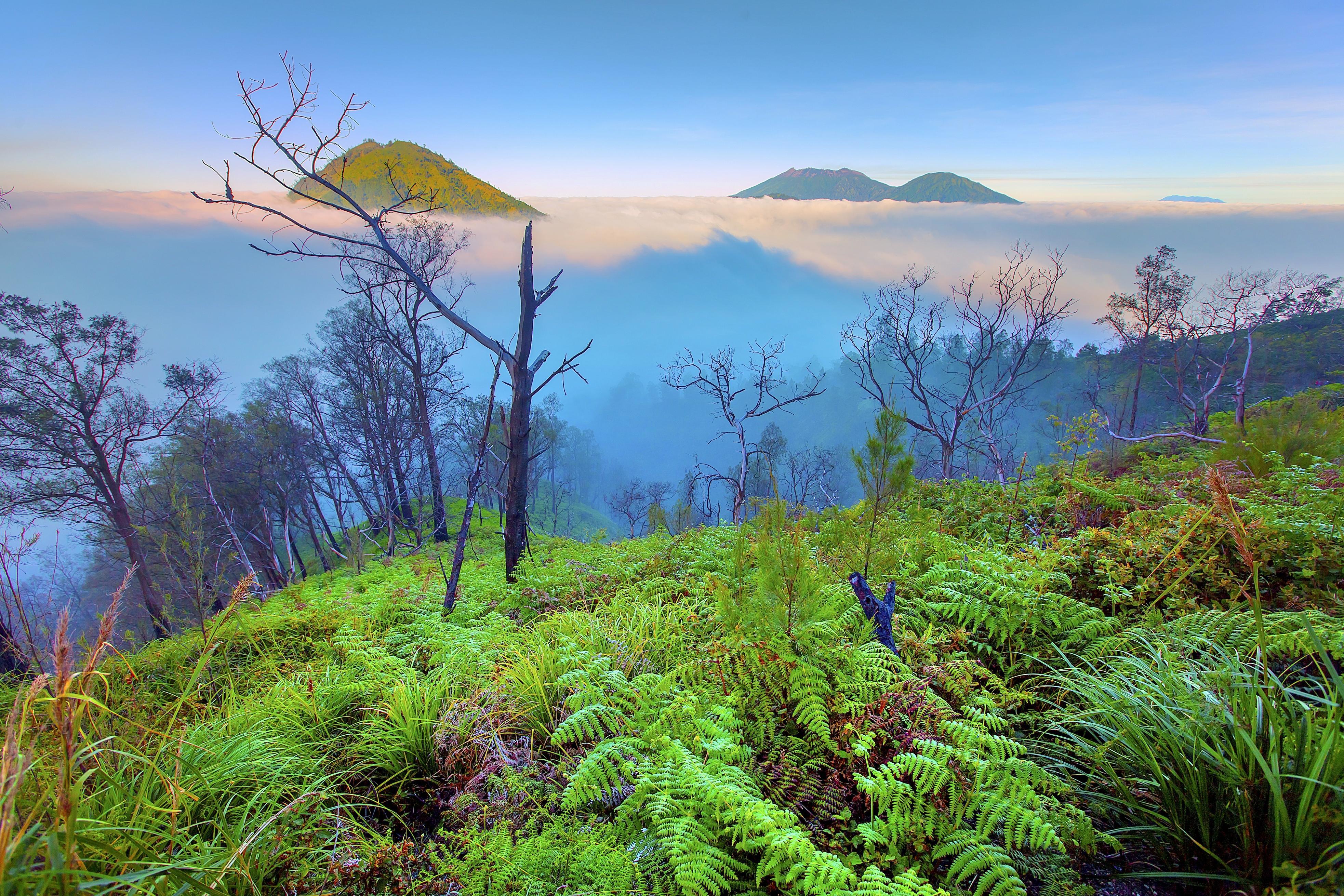 Kawa紅樹林