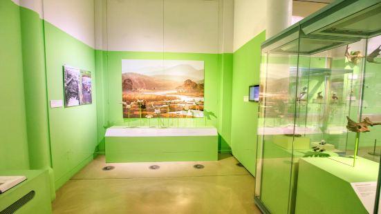 劍橋大學考古和人類學博物館