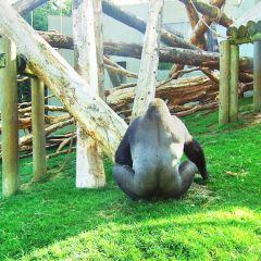 Howth Swim Safari User Photo