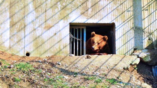 伯爾尼熊公園