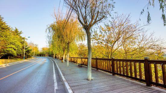 木棧道(濱海路)