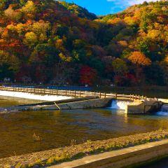 Arashiyama User Photo