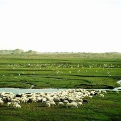 亞門草場用戶圖片