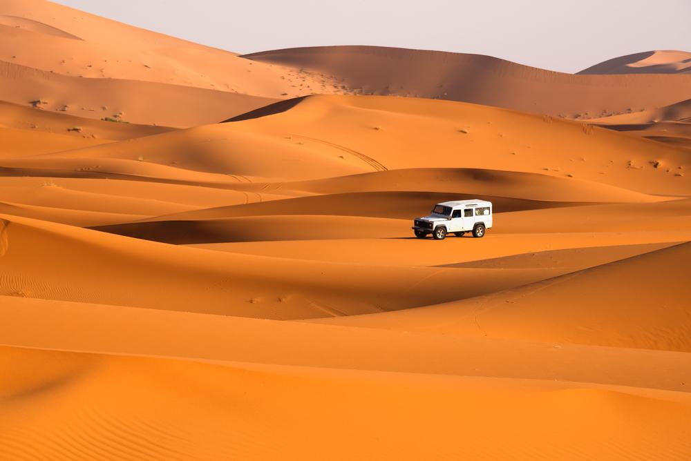 Overnight Safari - sharing