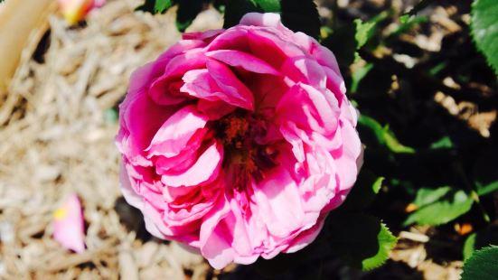 E.M. Mills Rose Garden