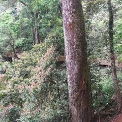 Hongdoushan Ecological Park User Photo