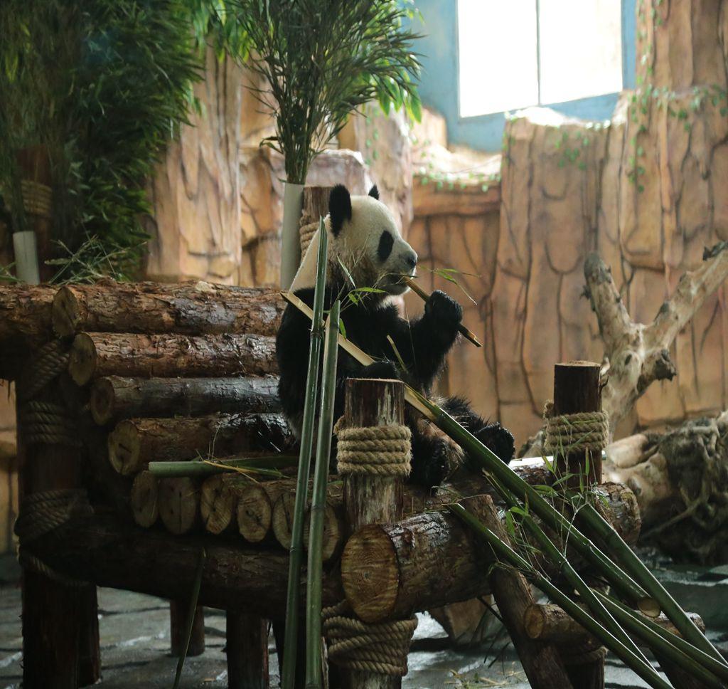 Quanzhou Wildlife Zoo (Quanzhou Wildlife World)