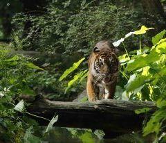 達拉斯動物園用戶圖片
