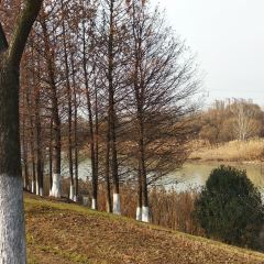 Wetland Park of Ancient Yellow River User Photo