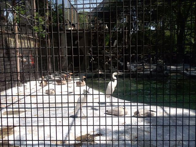 왕청동물원