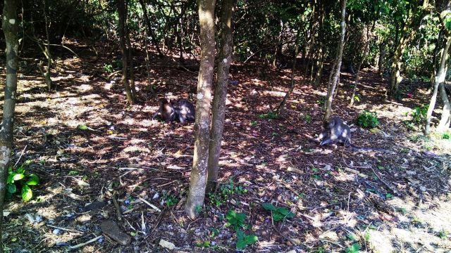 聖猴森林公園