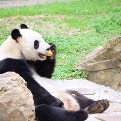 Nanshan Bamboo Sea User Photo