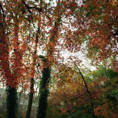 紅楓崗用戶圖片