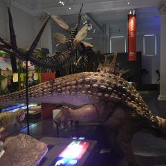 澳洲博物館用戶圖片