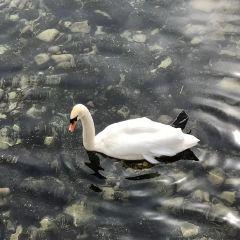 博登湖用戶圖片