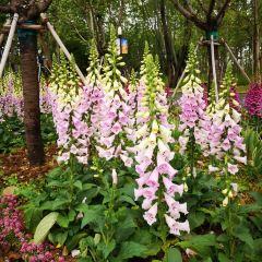 Hefei Arboretum User Photo