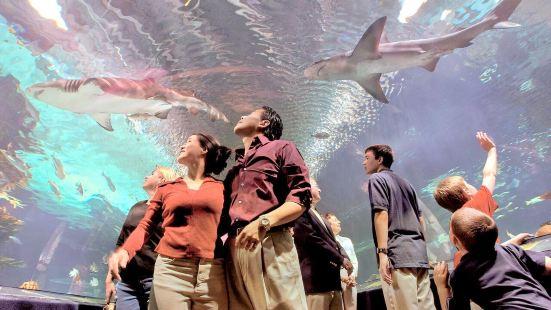 紐坡特水族館