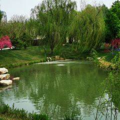 The Red Water Bloom Lake Wetland Park User Photo