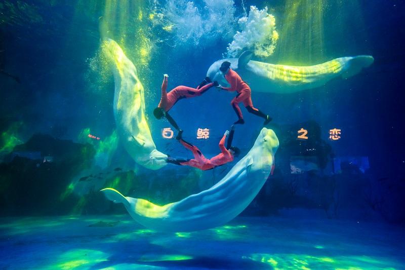 Tianjin Haichang Polar Ocean Park