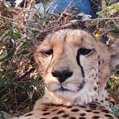 Mukuni Big 5 Safaris User Photo
