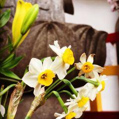 普濟寺用戶圖片