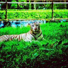 네가라 동물원 여행 사진
