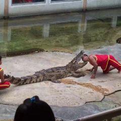 鱷魚園和海洋館用戶圖片