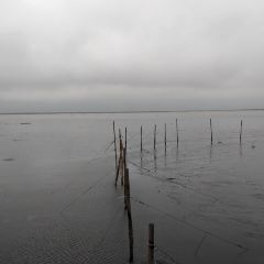 가오메이 습지 여행 사진