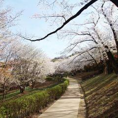 安山都市自然公園用戶圖片