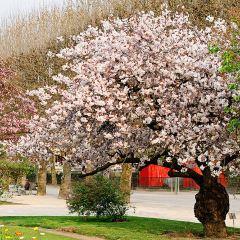 巴黎加丁種植園用戶圖片