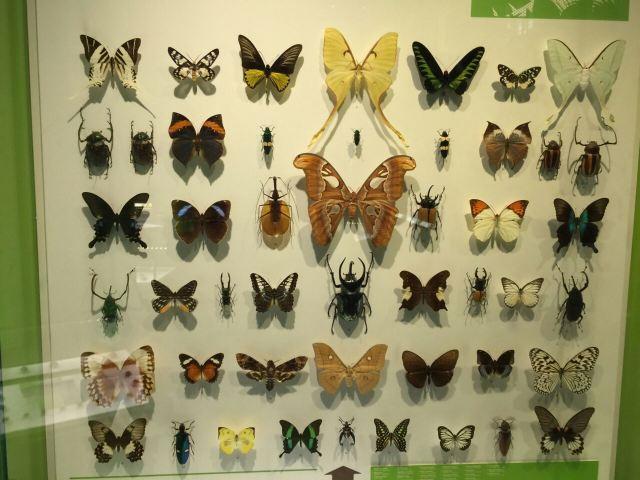 蒙特利爾昆蟲館