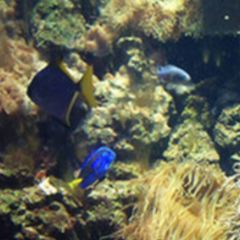 Aquarium Kiel User Photo