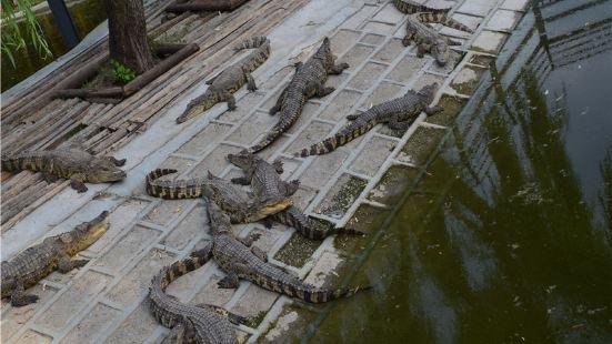 蘭陵鱷魚樂園