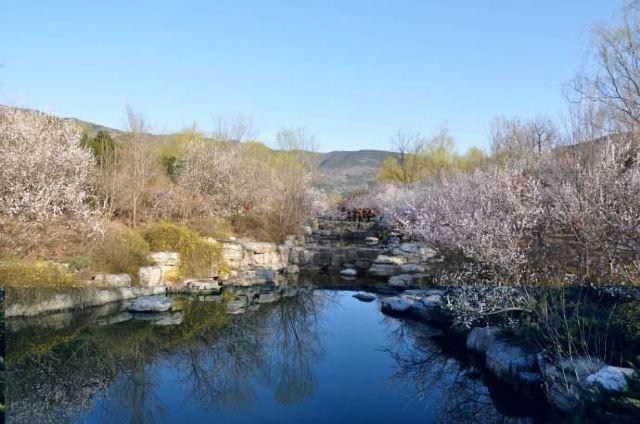 벚꽃 계곡
