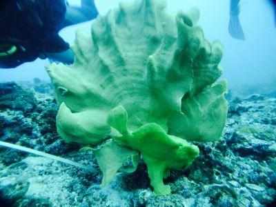 Malapascua Exotic Diving Center