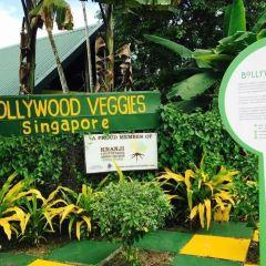Bollywood Veggies User Photo