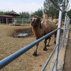 Shenzhou Desert Wild Animal Park User Photo