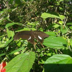 蝴蝶園用戶圖片