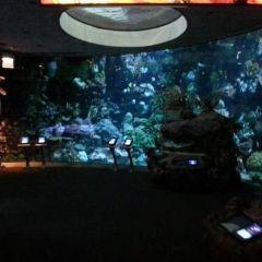 謝德水族館用戶圖片